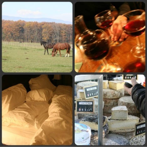 horses wine cheese bed