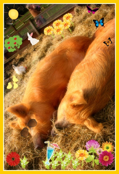 two Spring piggies