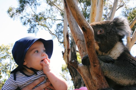 boy with koala