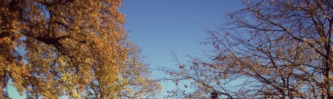 autumn trees blue skies