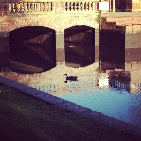 duck swimming in canal