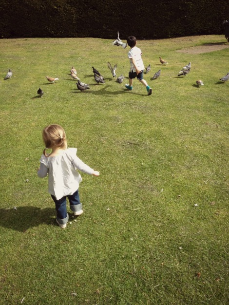 children chasing birds