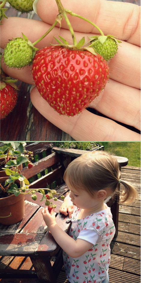 Strawberry and little gardener