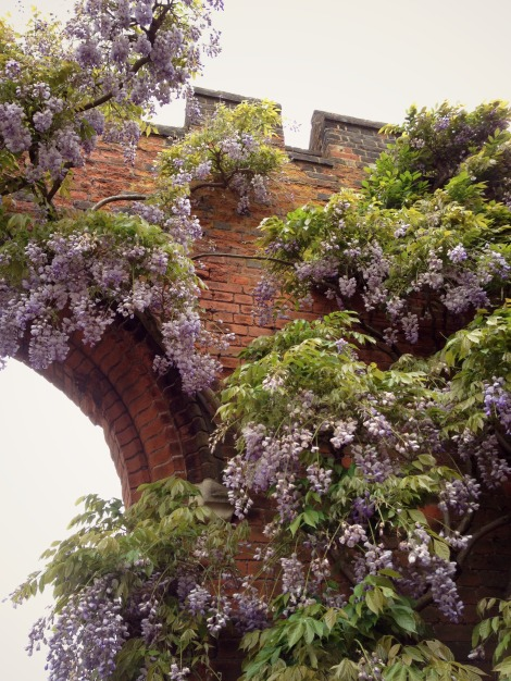 wisteria on brick wall