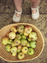 toddler collecting apples