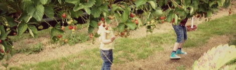 strawberry picking | bluebirdsunshine