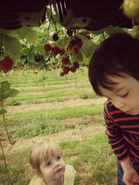 boy and girl picking strawberries