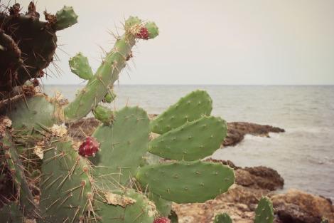 Cactus on Cala Bona Majorca | bluebirdsunshine
