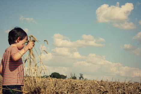 Boy in the Corn | bluebirdsunshine