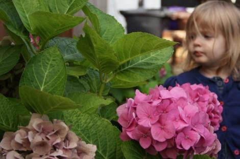 girl and pink hydrangeas | bluebirdsunshine