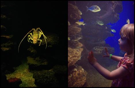 Lobster Tank Palma Aquarium | bluebirdsunshine