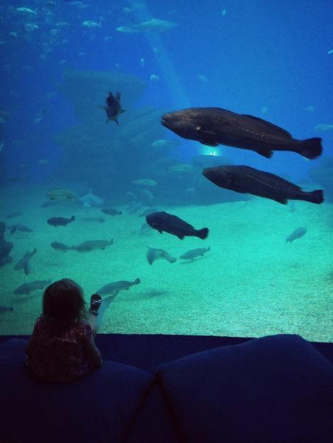 Shark Tank Palma Aquarium | bluebirdsunshine