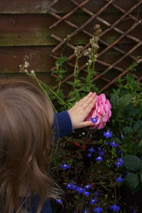 touching pink rose | bluebirdsunshine