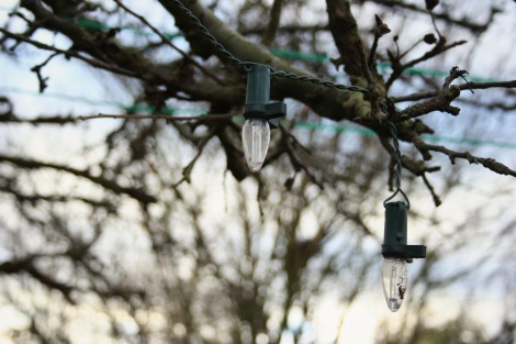 bulbs on bare apple tree
