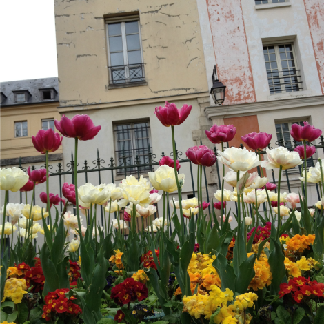 Tulips in Paris | bluebirdsunshine