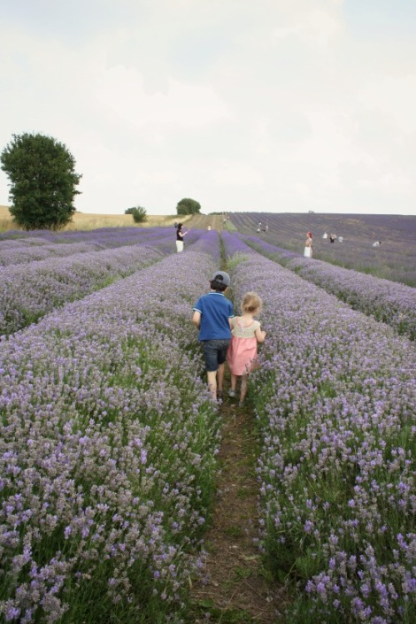 Siblings picking lavender in august | bluebirdsunshine